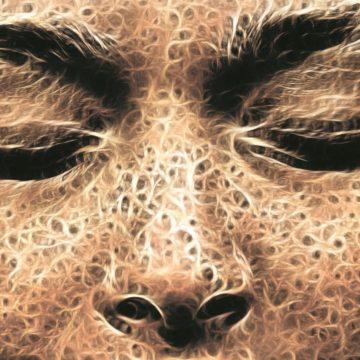 Der unsichtbare Mensch - Mysterium Mensch - Die Geheimnisse des Nicht-Sichtbaren
